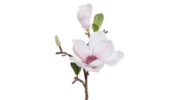 Magnolienzweig Lada